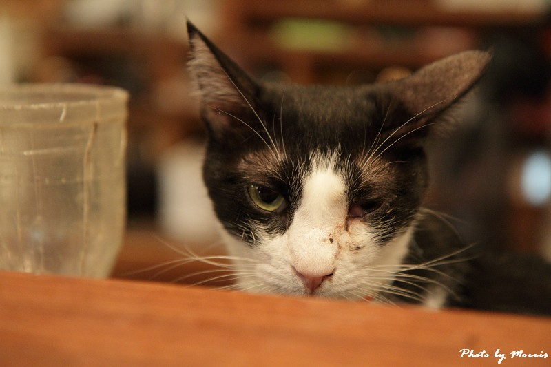 貓物語‧極簡咖啡 (41)