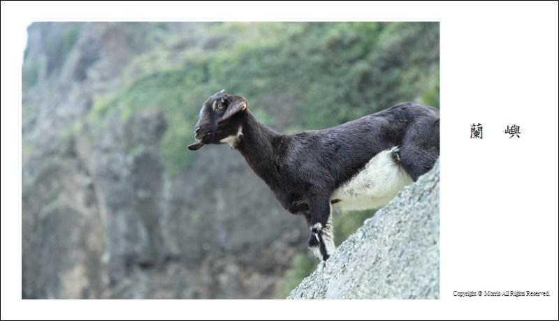 山羊的國度 (12)