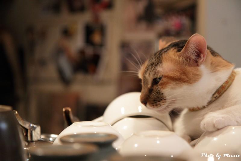 貓物語‧極簡咖啡 (03)