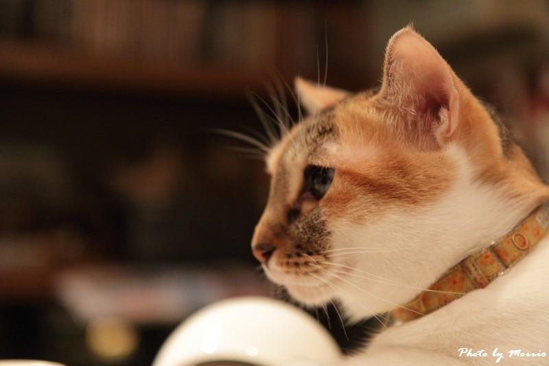 貓物語‧極簡咖啡 (42)