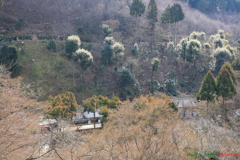 清水寺 (14)