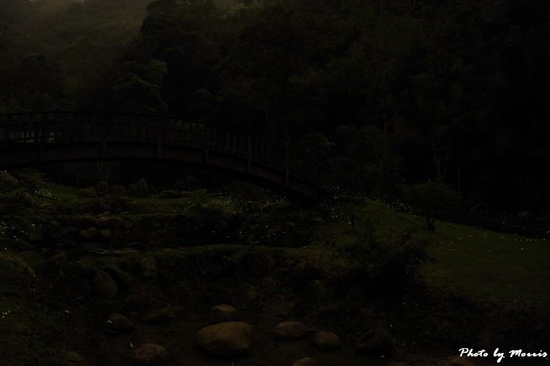螢光晚會 (5)