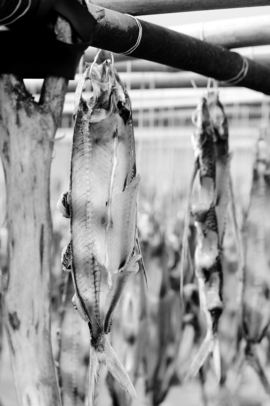 飛魚季 (32)