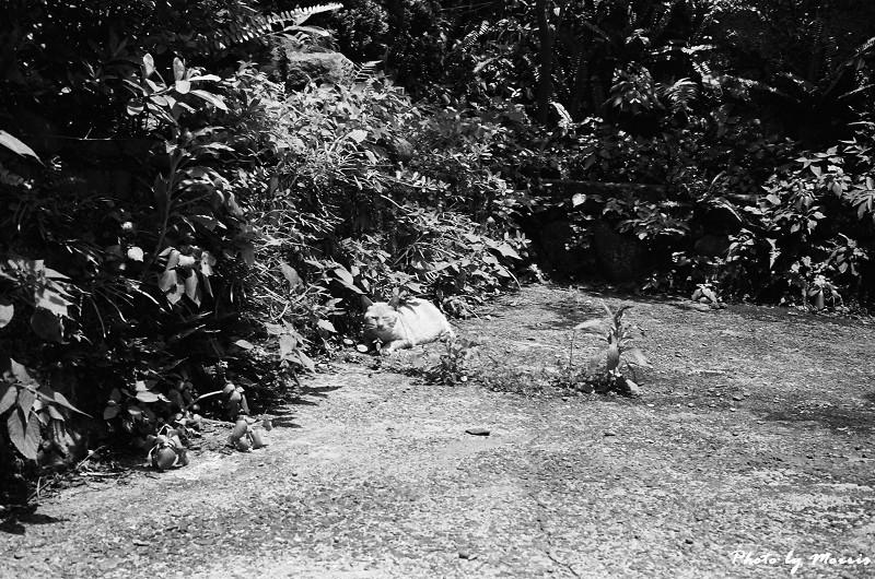 金瓜石散策 (03)