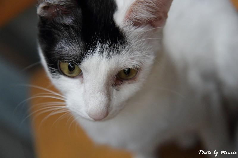 貓物語‧極簡咖啡 (12)