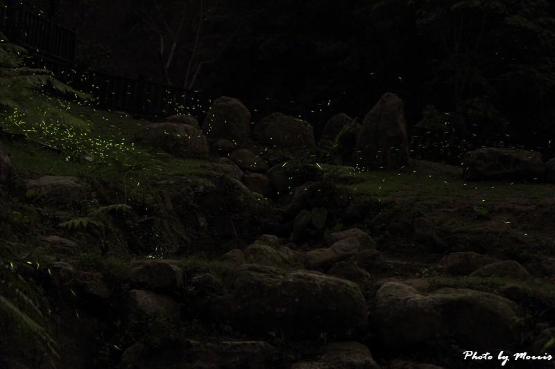 螢光晚會 (11)