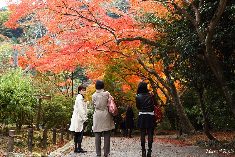 D2 嵐山 (3)
