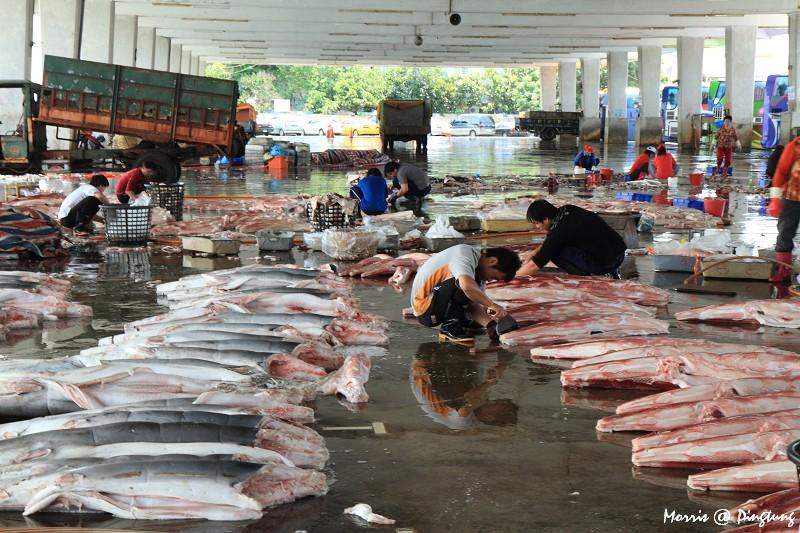 漫遊東港漁港&漁市 (9)