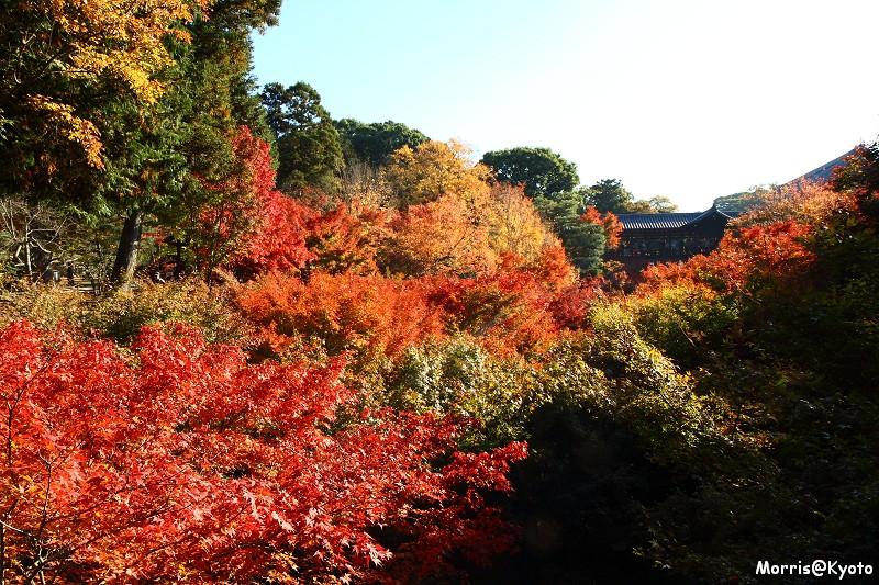東福寺 (58)