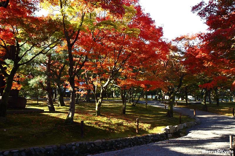 東福寺 (20)