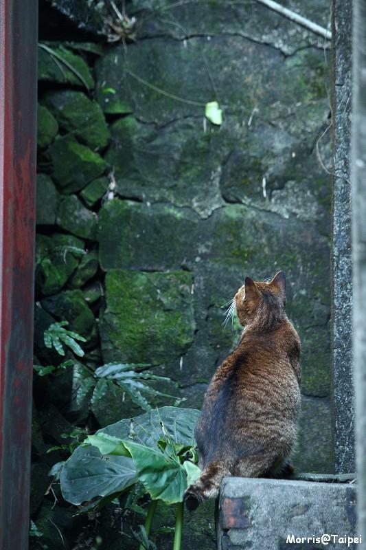 再訪猴硐貓村 (4)