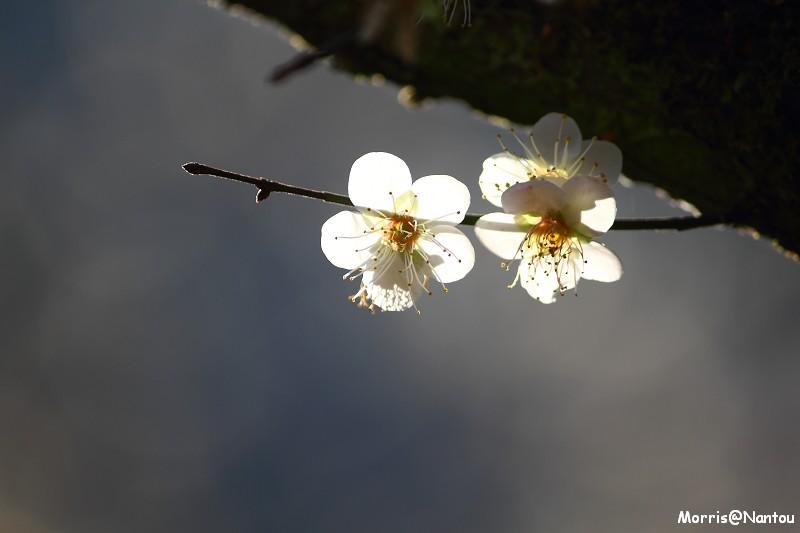 烏松崙 (7)