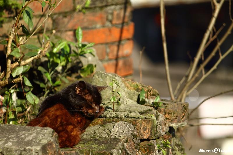 再訪猴硐貓村 (17)