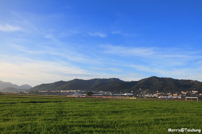2011新社花海 (11)