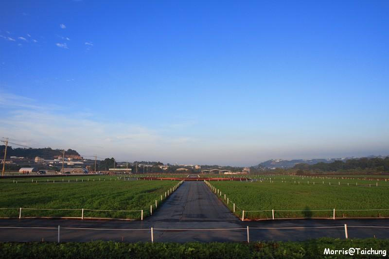 2011新社花海 (2)