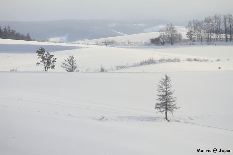 美瑛之冬一 (66)