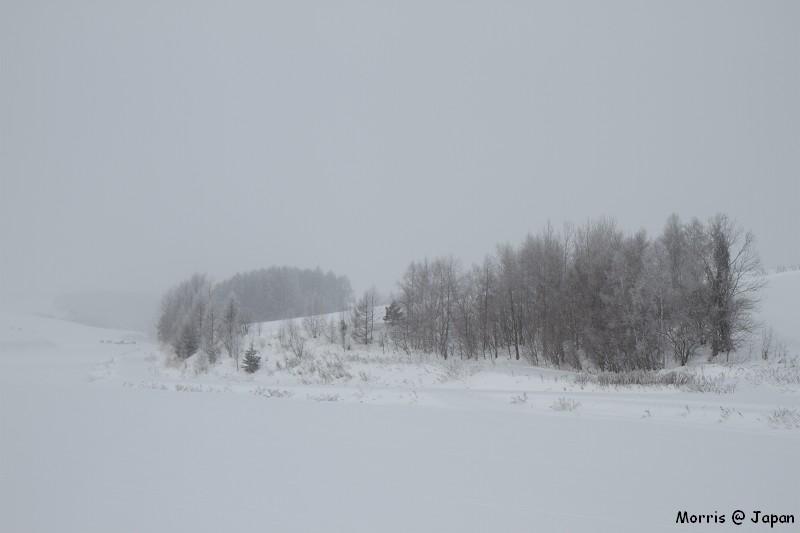【日本】冬の美瑛。夢幻白色雪景 | 攝影‧旅行‧拈花惹草→Morris