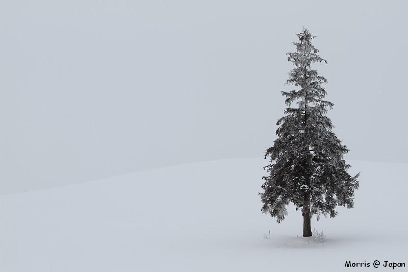 美瑛之冬一 (79)