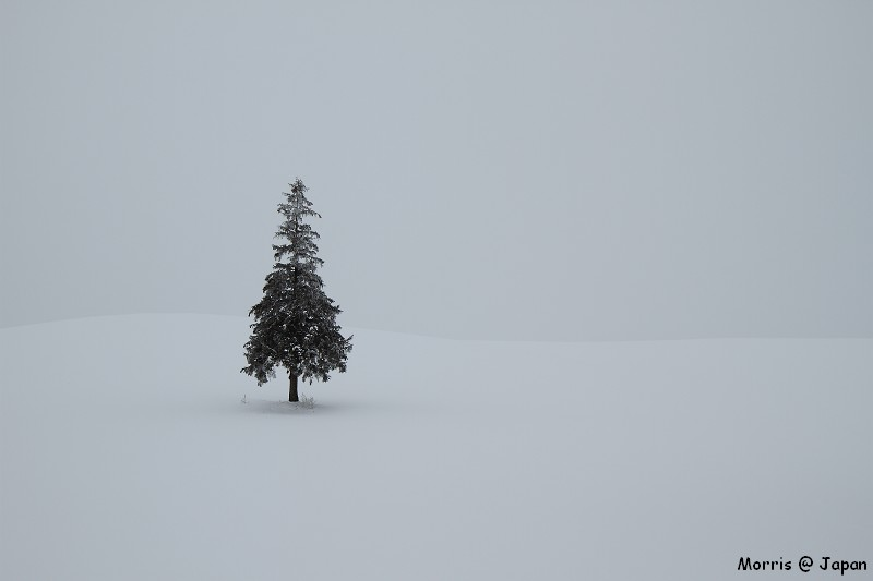 美瑛之冬一 (83)
