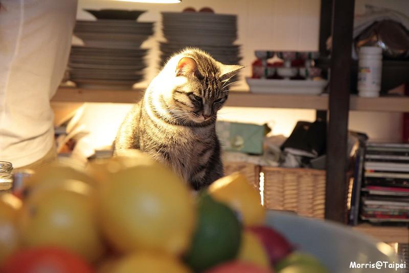 屋頂上的貓私廚 (58)