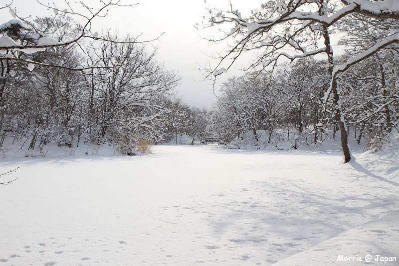 大沼公園 (77)