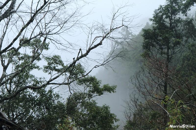翠峰湖環山步道 (41)