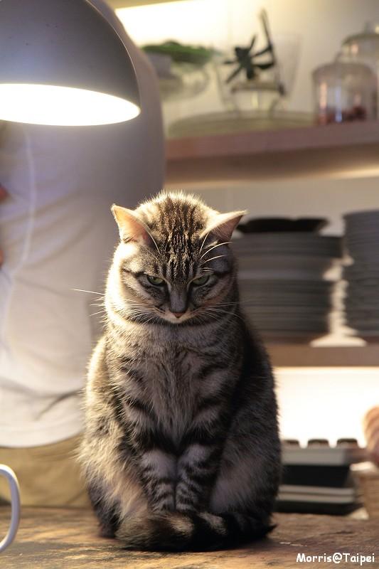屋頂上的貓私廚 (57)