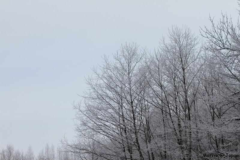 美瑛之冬一 (77)