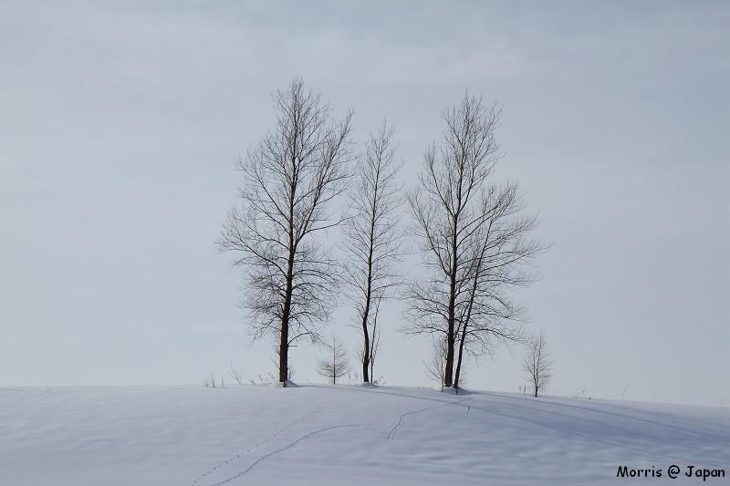 美瑛之冬 二 (47)