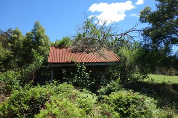 Overgrown hut