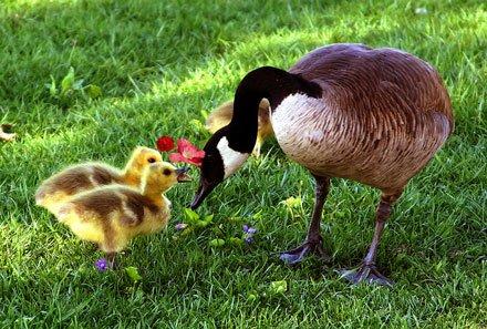 Photos de la Fête des mères