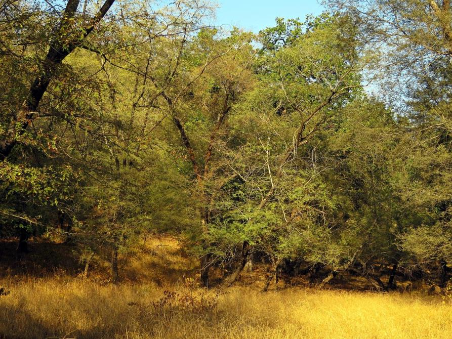 Ranthambore Nationalpark