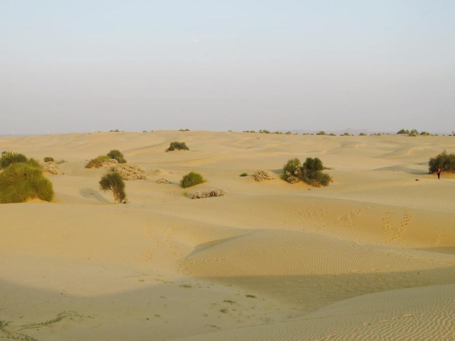 die Wüste Thar, Rajastan
