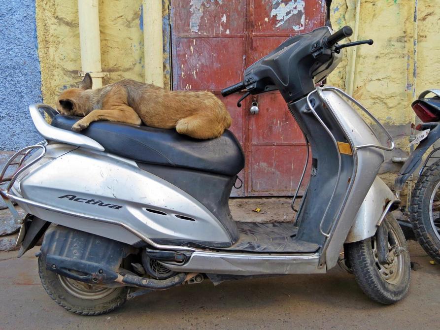 Hund schläft auf Motorroller, Indien