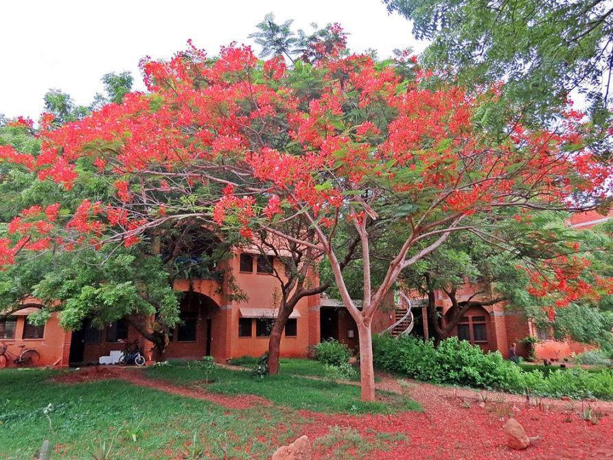 idyllische Siedlung in Auroville
