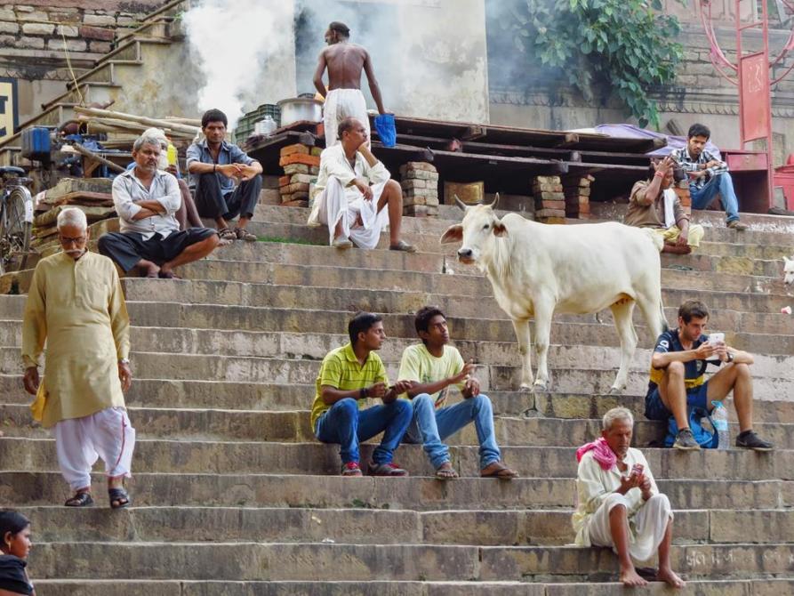 Menschen und Kühe am Assi Ghat in Varanasi