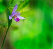 stinesk-1IMG_8407orchid