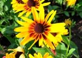 _DSC0068_5220. P.Evinger Splash of Yellow # 01