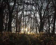 cboveeBPFP Sunrise