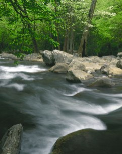 The Middle Prong of the Little River flows across rocks and boulders and through a spring forest near Tremont, in Great Smoky Mountains National Park in Tennessee