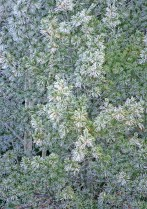 362-76 Pine Frost