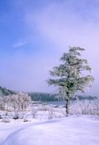 363-66 Frost Tree Bay