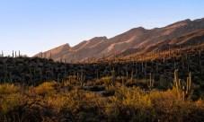 Chuck Hunnicutt - Sabino Canyon-3