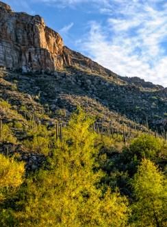 Chuck Hunnicutt - Sabino Canyon-5