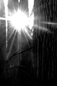 Gail Chastain - Light thru Darkness