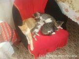 Vizita in sat - 24 iulie 2013 - caini si pisici - 16