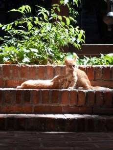 Kittens playing in the cathedral grounds