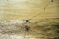 Ladujacy albatros