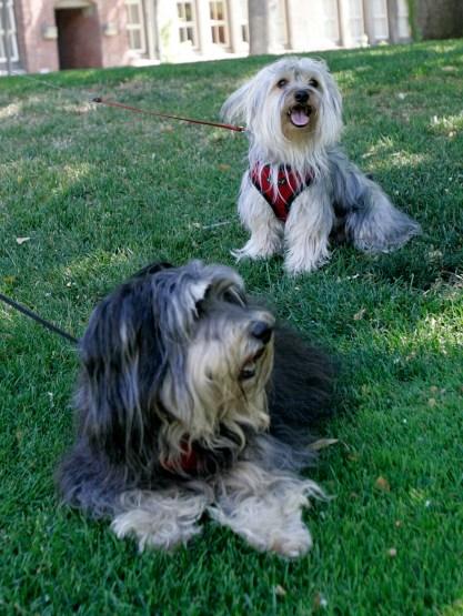 Jonae Scott // Mosaic Staff Photographer wo dogs enjoy the warm weather on the San Jose State University campus in San Jose, Calif. on Monday, June 17, 2013.