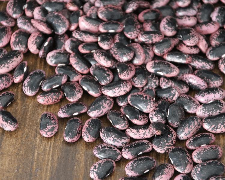 produktbild mosauerin shop wurzgarten käferbohnen